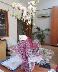 Özel Renk Orkide