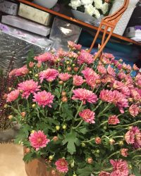 Canlı Çiçek 1