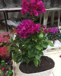 Canlı Çiçek 2