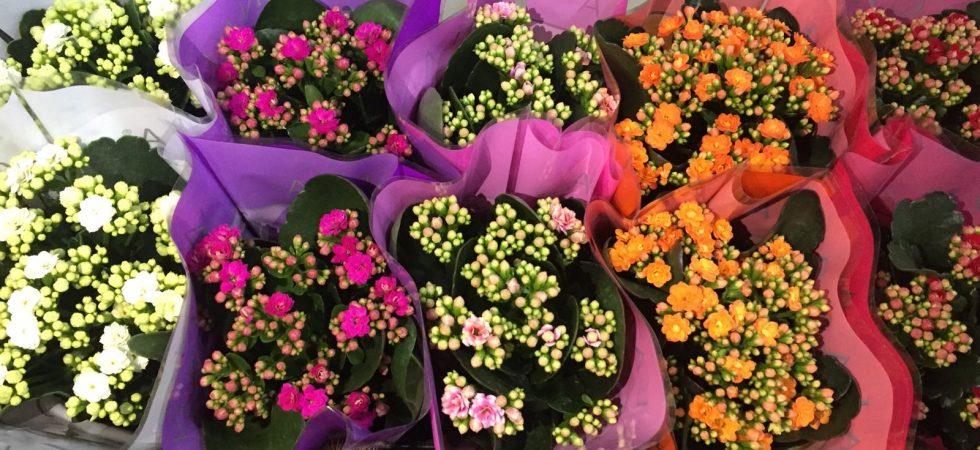 Canlı Çiçek 3