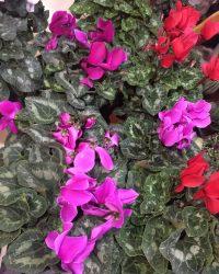 Canlı Çiçek 4