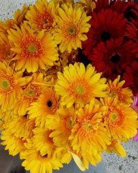Canlı Çiçek 5