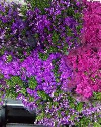 Canlı Çiçek 9