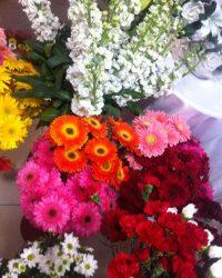 Canlı Çiçek 10