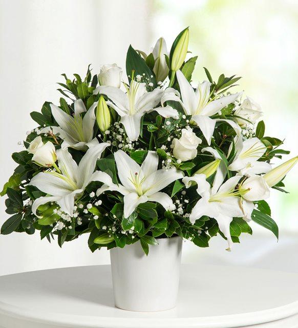 Canlı Saksı Çiçeği