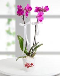 Orkide 2'li