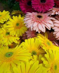 Canlı Çiçek 11