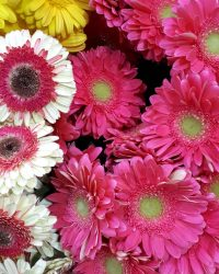 Canlı Çiçek 20