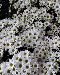 Canlı Çiçek 12