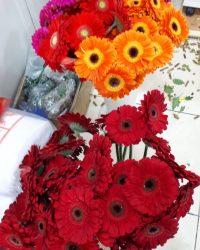 Canlı Çiçek 13