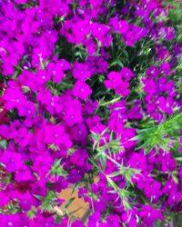 Canlı Çiçek 14