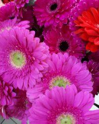 Canlı Çiçek 15