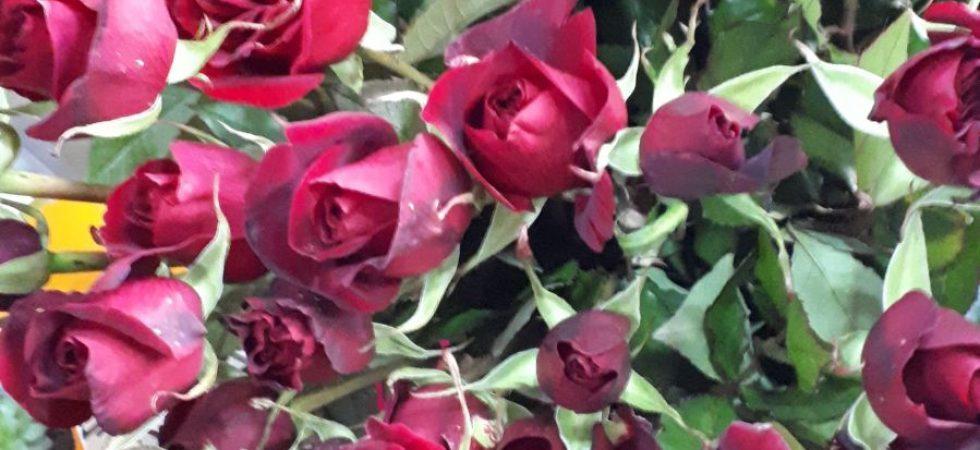 Canlı Çiçek 16