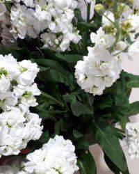 Canlı Çiçek 18